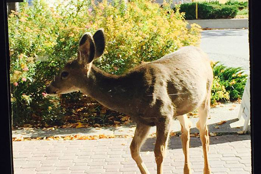 Oh look, it's a deer at our Princeton office!